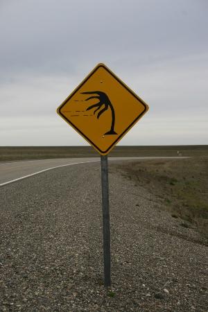 Windige Palme